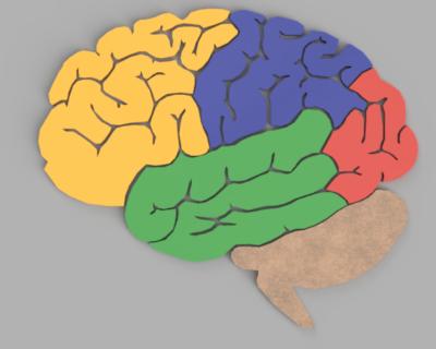العقل البشري | علم الاحياء